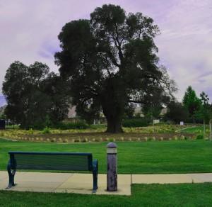 Harvest Park